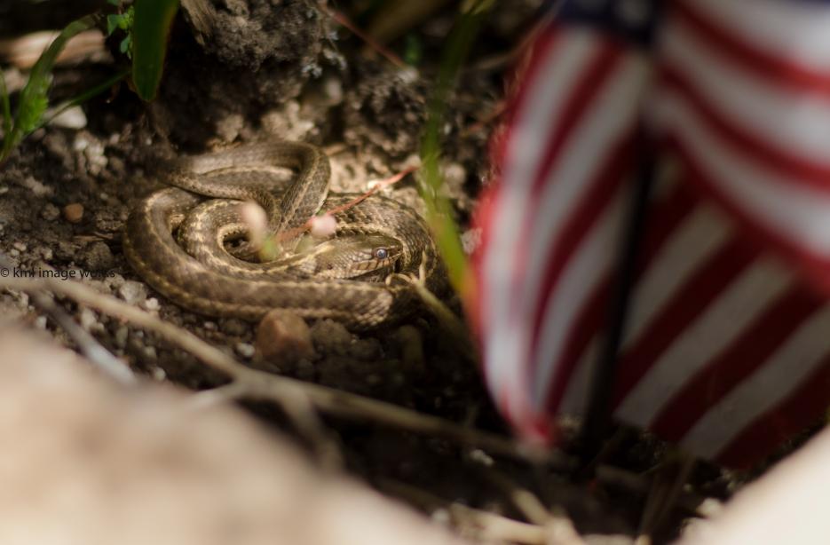 snake-1-2