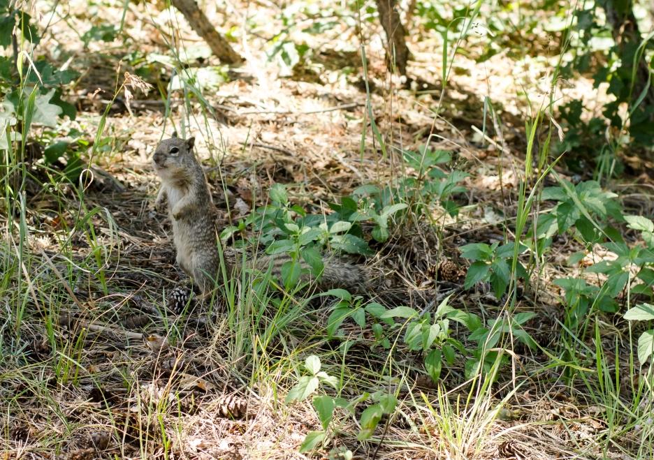 squirrl!-1